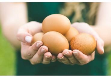 Куриные яйца. Польза куриных яиц.
